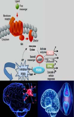 Piperidine derivatives for the control of Parkinson's and Alzheimer's
