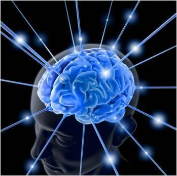 Research & Services | Traumatic Brain Injury Laboratory