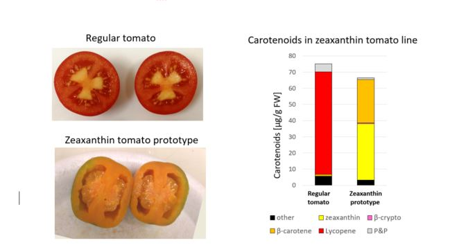Anti-Oxidants Rich, Non-GMO Tomatoes